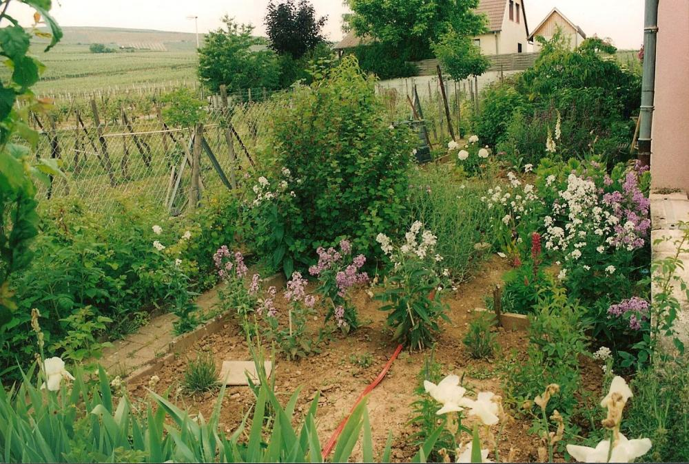 Chantier wettolsheim jardins zen jardinier paysagiste for Paysagiste alsace